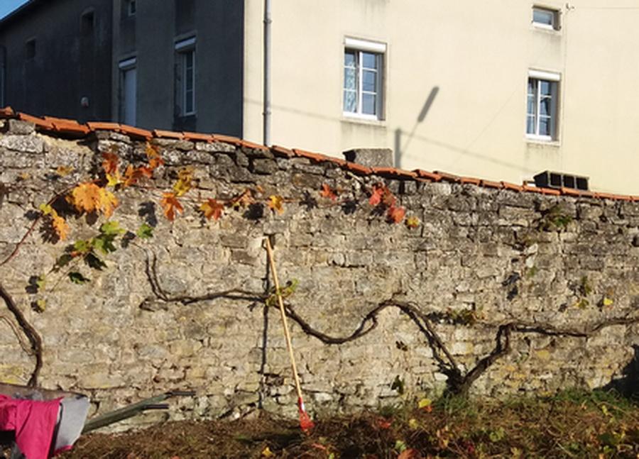 chantier-vigne-le-22-10-2016